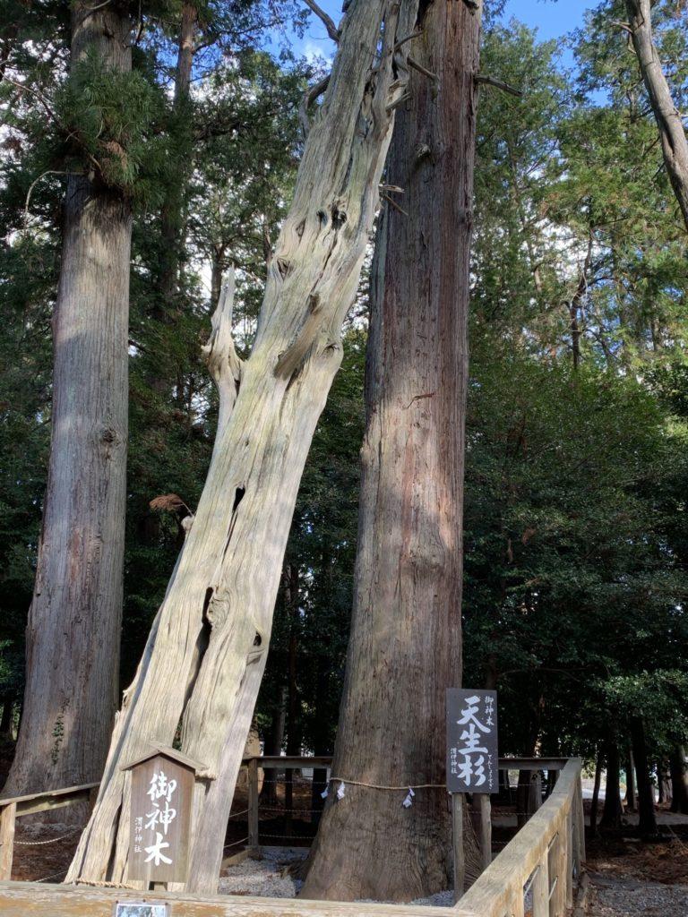 いい神社杉の木