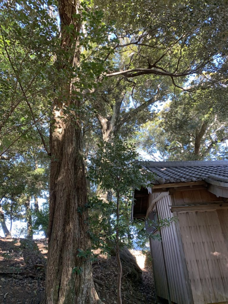 厳島神社7